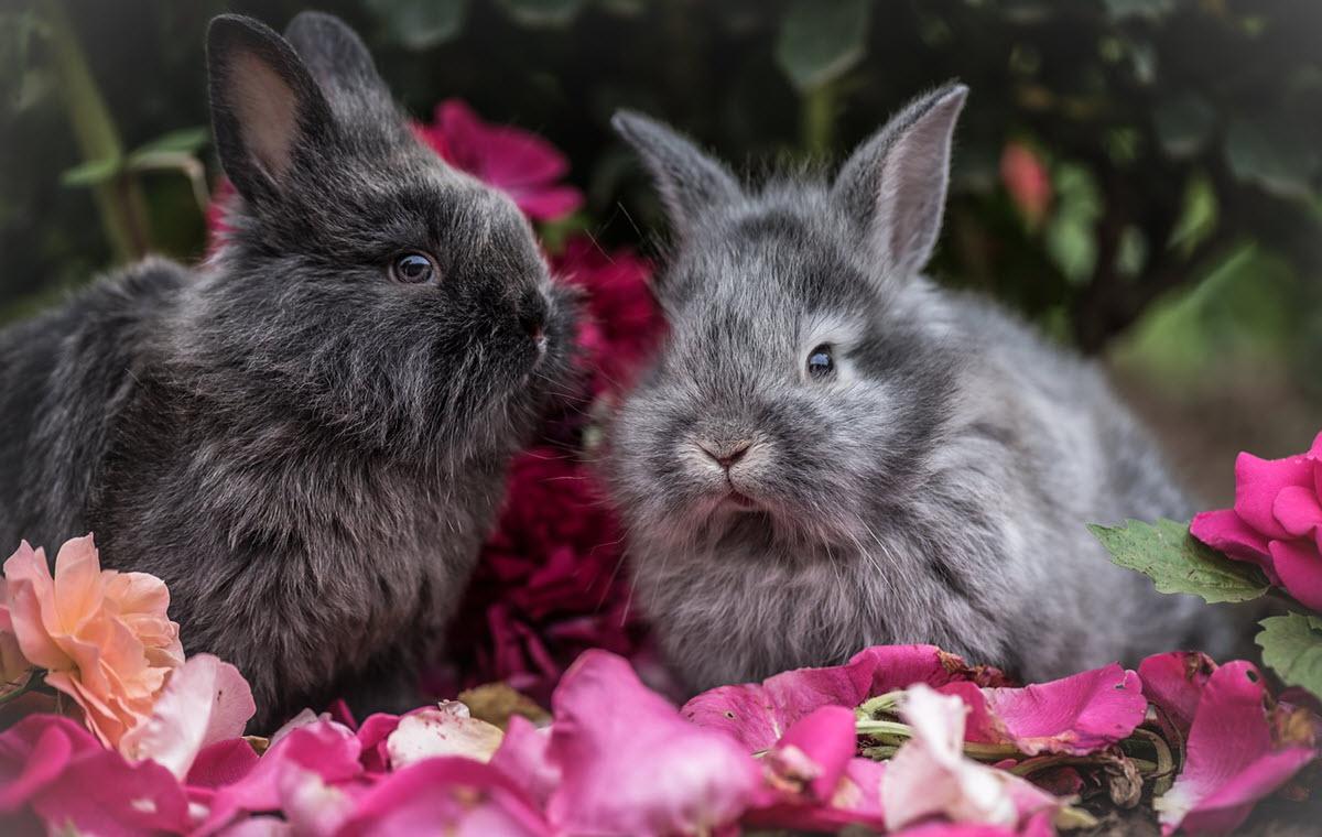 kaniner 2 svarta
